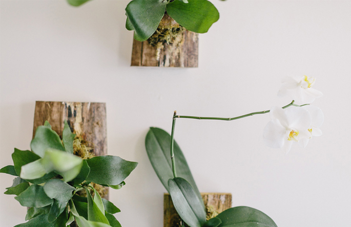 DIY Wall Fern