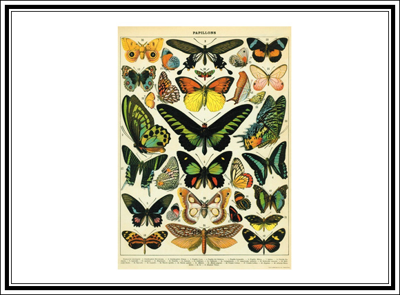 What Vintage Home Decor Pieces Can You Buy For Under $12? #8 Vintage butterfly poster