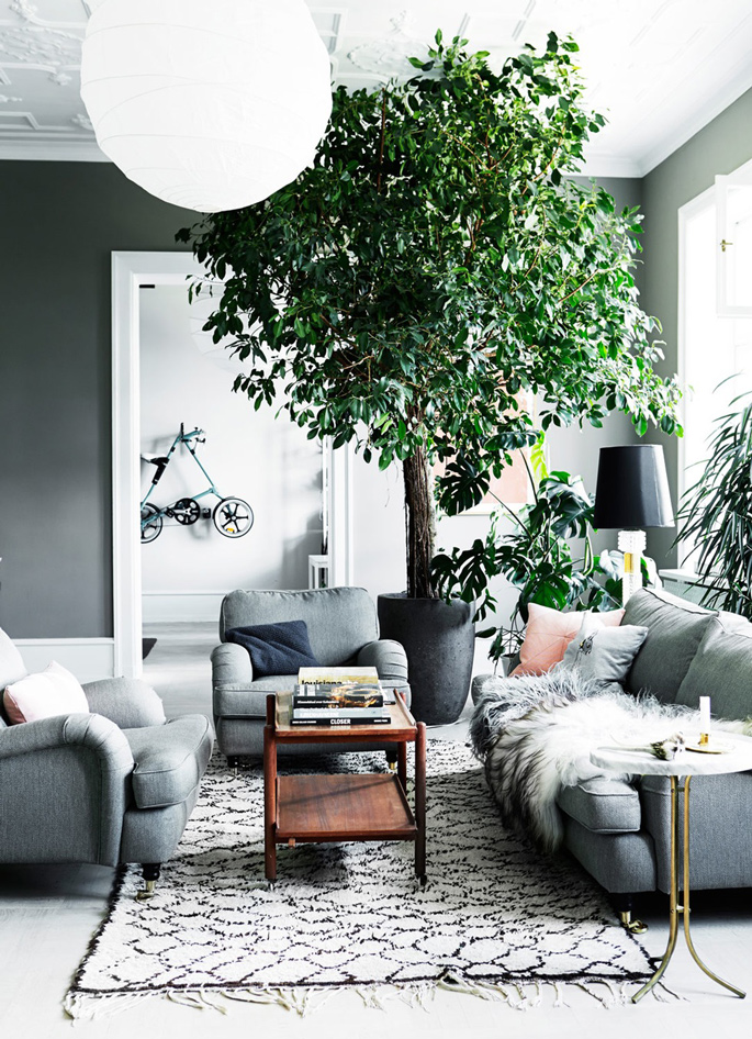 Living room with a tree