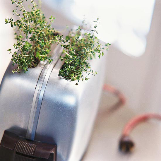 Inventive herb storage ideas